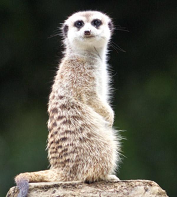 hamilton-zoo